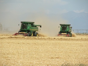 Combing-barley-harvest