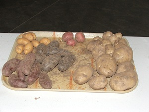 Varieties-of-Potatoes