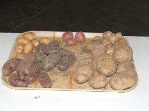Potato-Festival-potato-types