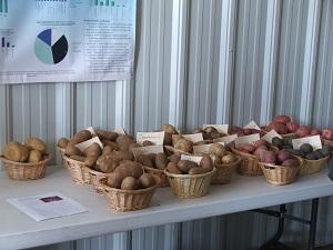 Varieties-of-potatoes