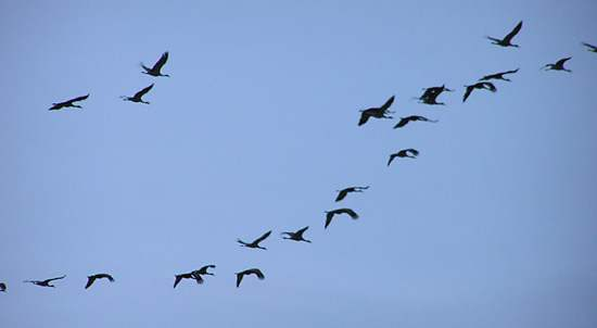 Flying-