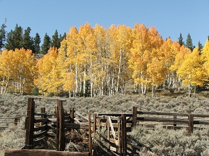 Colorado-trees-in-fall
