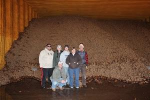 Cellar full of potatoes