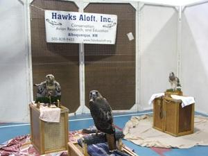 Hawk-exibit-at-Monte-Vista-Crane-Festival