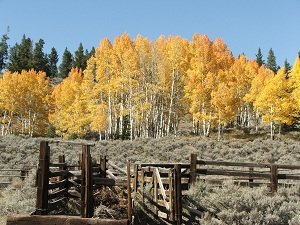 Colorado-trees-in-fall
